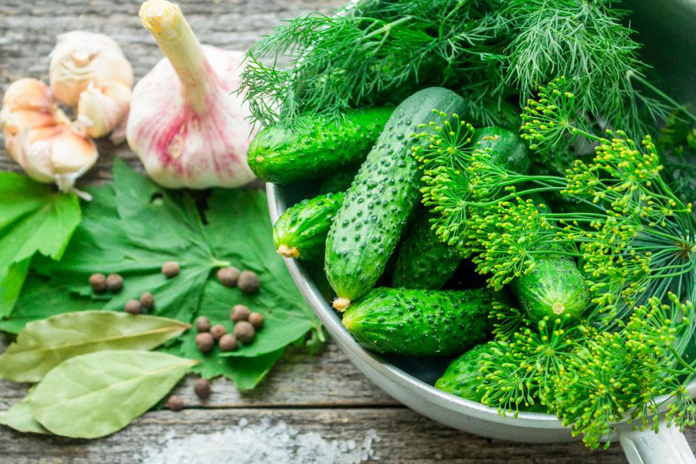 Огурцы для маринования с зеленью
